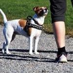 Come comunicano i cani tra loro? Lo scopriamo in diretta da Pordenone