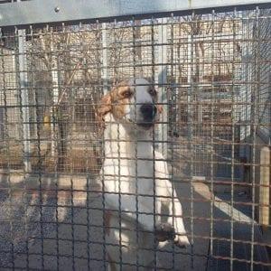 Anche il canile di Gorizia ha il suo open day per fare visita agli amici animali