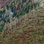 """Lavori dopo la tempesta Vaia a Paluzza: """"L'habitat è in pericolo"""""""