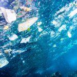 Bottiglie di plastica, polistirolo e retine: la classifica dei rifiuti che finiscono nel mare del Friuli