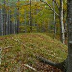 Il bosco grande protagonista della Festa della Val Alba