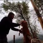 Salva un capriolo nelle campagne di Moggio Udinese, le commoventi immagini da vedere