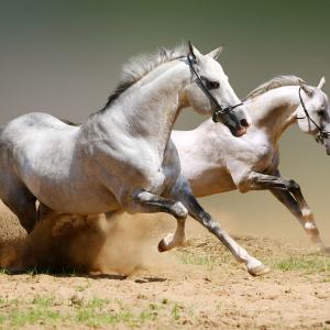 """All'Isola della Cona i bambini diventano stallieri con """"Buongiorno cavalli!"""""""