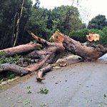 Tempesta Vaia, ricostruzione a tempi record: i soldi spesi e i cantieri aperti