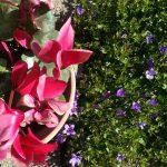 Vivai e fiorai ora possono aprire in Friuli: più colori sui balconi a Pasqua