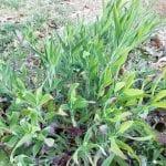 Tra prati ed orti come riconoscere le piante mangerecce autunnali