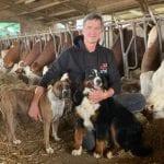 Crolla il prezzo del latte e della carne in Fvg, allevatori in allarme