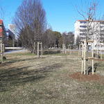 """Oltre 800 alberi in più a Udine entro la primavera: """"Il nostro impegno per il verde"""""""