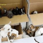 Più di 200 cuccioli salvati a Gorizia dal traffico illegale dell'Est Europa