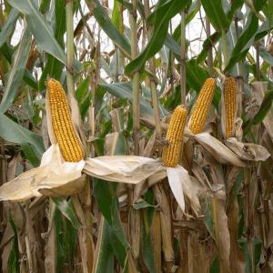 Oltre 93 milioni in Fvg per l'agricoltura, i nuovi bandi di finanziamento