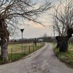 A rischio i gelsi storici della campagna di Montesanto, la denuncia di Legambiente