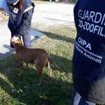Presa a calci e pugni dal suo padrone, cagnolina salvata dalle guardie zoofile