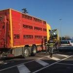 Agnellini senza aria e acqua dopo un controllo, raffica di sanzioni ai camionisti in Fvg