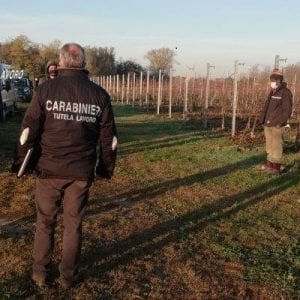 """Caporalato nelle aziende agricole del Friuli, 2 arresti: """"Sottopagati e sfruttati"""""""