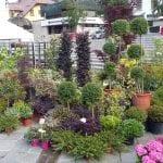 """Il centro diventa un grande giardino fiorito, ritorna """"Tarvisio in fiore"""""""