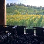"""L'Unione Europea pensa di """"annacquare"""" il vino, allarme in Fvg: """"I nostri prodotti di qualità non devono essere sviliti"""""""