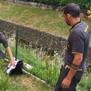 Cane rischia di annegare nella roggia a Buttrio, lo salvano i vigili del fuoco