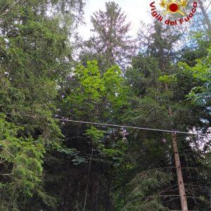 Gattino bloccato da 6 giorni in cima ad un abete a quasi 40 metri d'altezza a Sauris