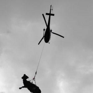 Finisce in un dirupo a Socchieve, mucca incinta salvata con l'elicottero