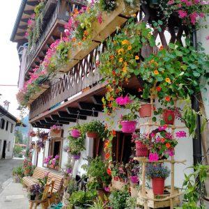 Il rosa delle Dolomiti sul balcone di casa propria, Forni regala i suoi fiori