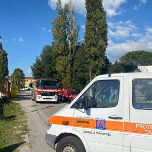 Alberi pericolanti o caduti, interventi tra Torviscosa e Aquileia
