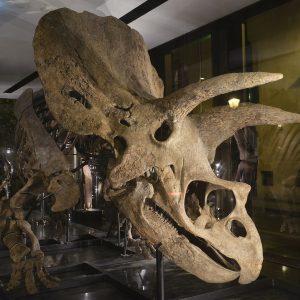 Il grande dinosauro Big John ricostruito in Fvg entra nel Guinness dei primati